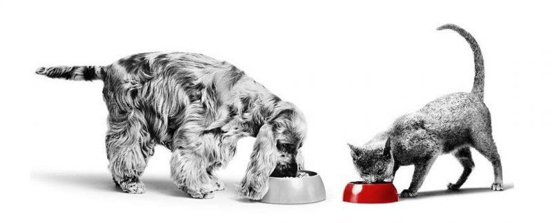 Síndrome da realimentação em gatos e cães