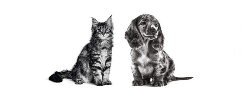 Doenças parasitárias em filhotes caninos e felinos