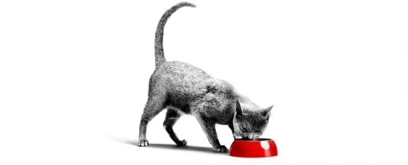 O consumo de dietas com maior teor de sódio para gatos idosos saudáveis