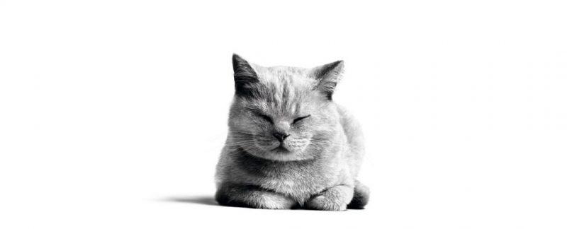 Importância da castração em felinos: conheça os benefícios