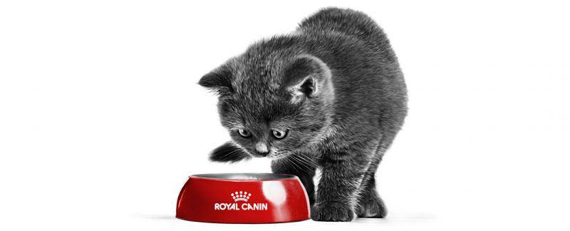 Alimento úmido SATIETY FELINE® e a perda de peso comprovada em gatos
