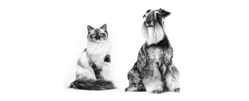 O sódio na alimentação de gatos e cães: mitos e verdades