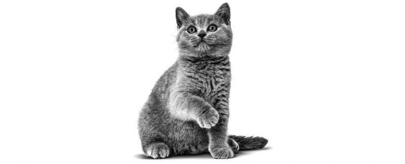 Quando indicar alimento light para gatos? Tire suas dúvidas