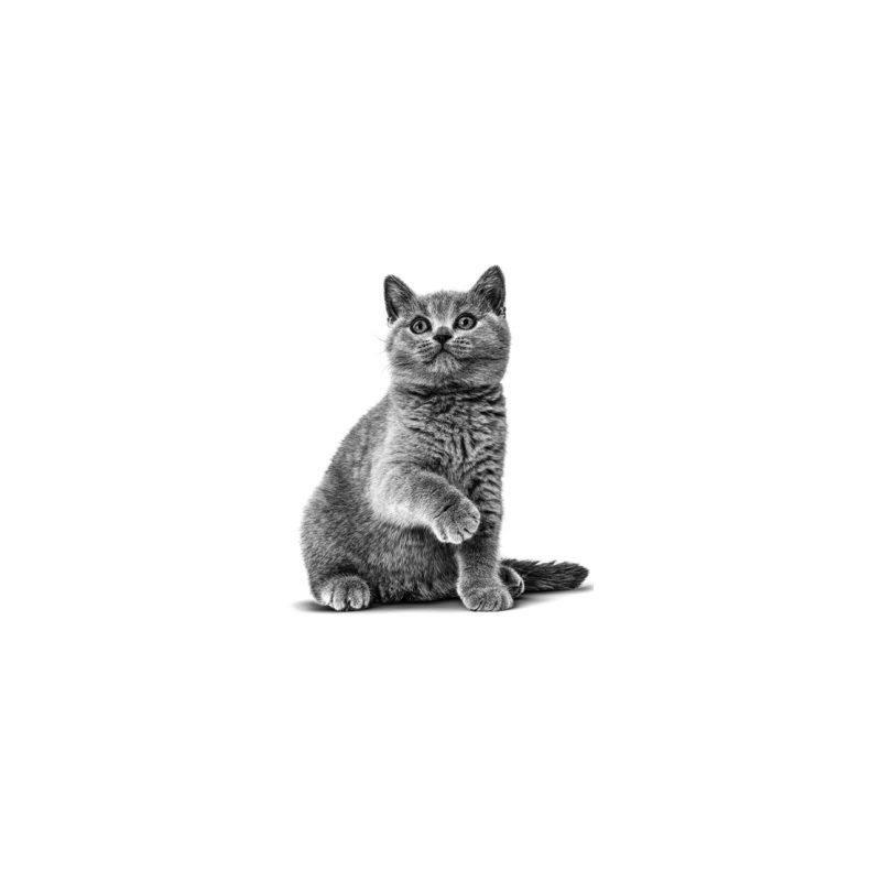 6 fatores de risco para obesidade em gatos