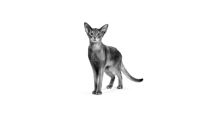 Microbioma gastrointestinal de cães e gatos: o equilíbrio em benefício do animal
