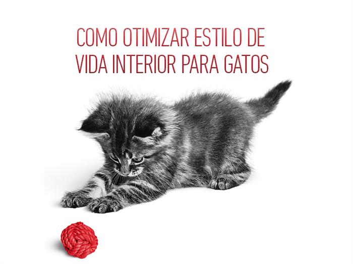 Como otimizar o estilo de vida interior para os gatos?