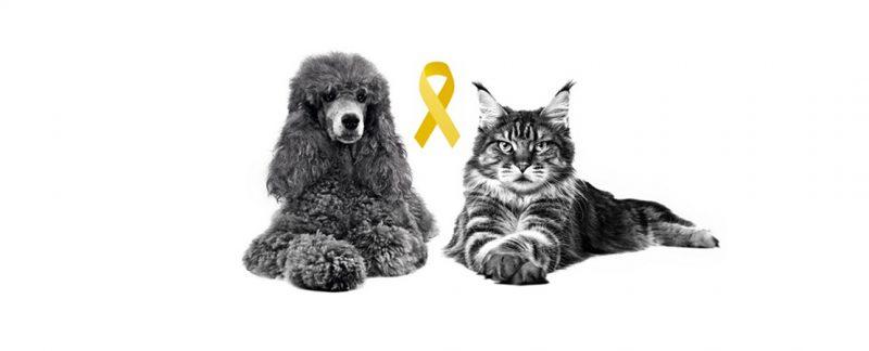 Março amarelo alerta para doenças renais crônicas em gatos e cães