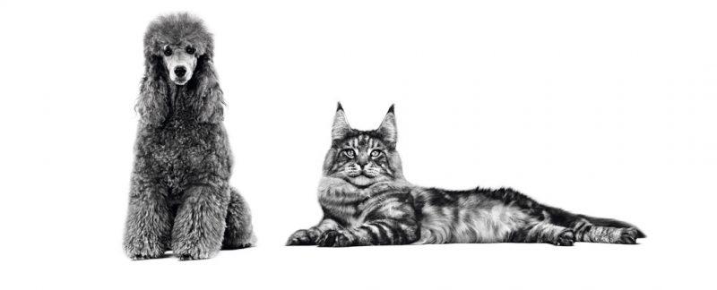 Abordagem nutricional em animais cardiopatas: muito além do sódio