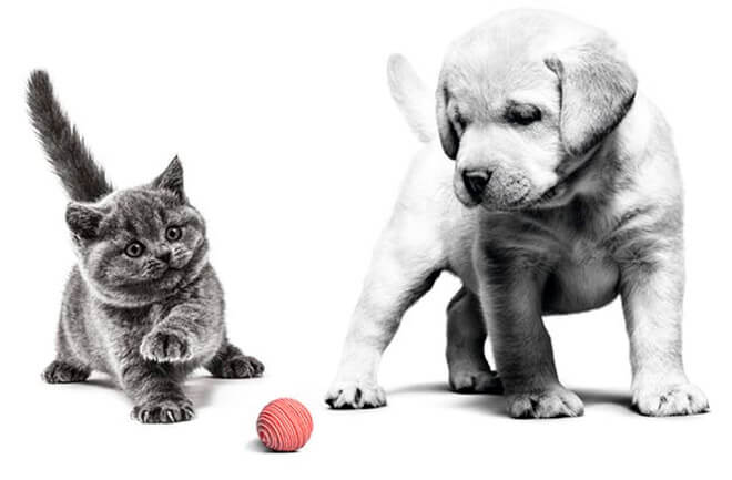 Puppy and kitten playing with a ball