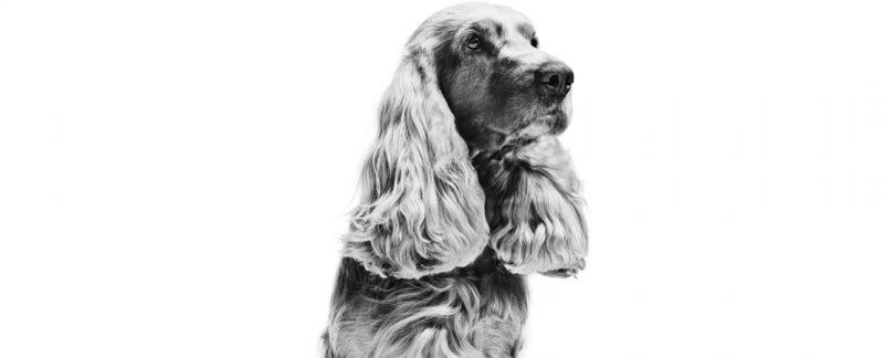 10 sinais mais comuns de alterações dermatológicas em cães e gatos