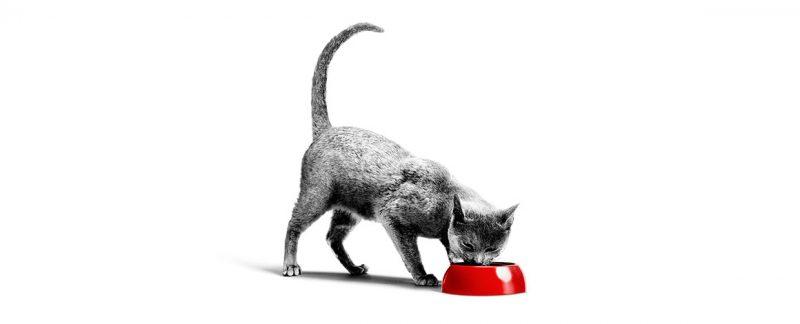 Webinar: Manejo nutricional do animal nefropata - o que há de novo?