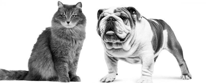 Riscos da obesidade para cães e gatos