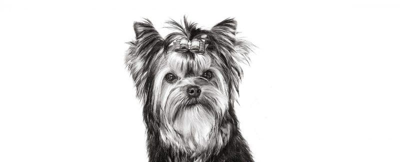 Os tipos de urólitos mais comuns em cães e gatos