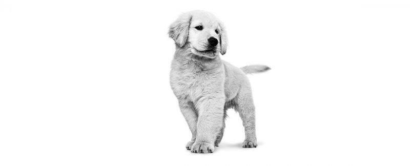 Webinar: Mitos e verdades na nutrição de cães e gatos