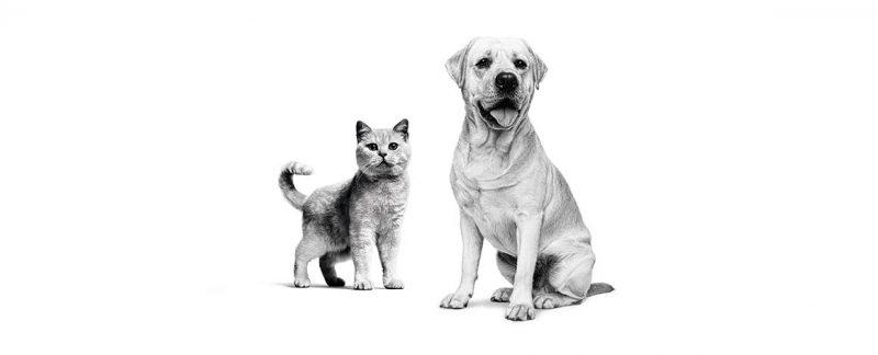 O comportamento de implorar de cães e gatos não é apenas por comida