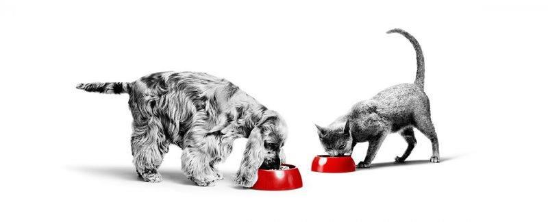 Importância do ômega-3 EPA & DHA na dieta de cães e gatos