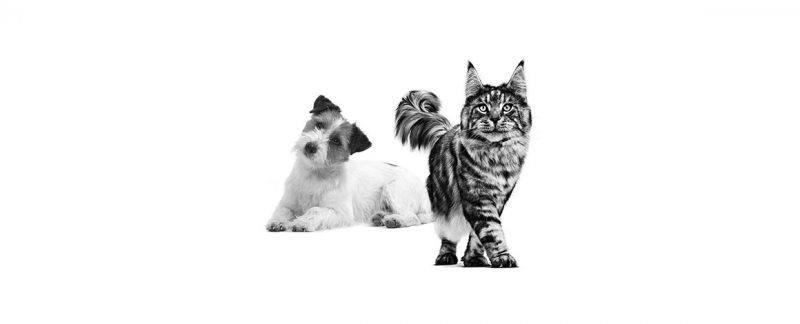 Linha de nutrição veterinária Royal Canin®
