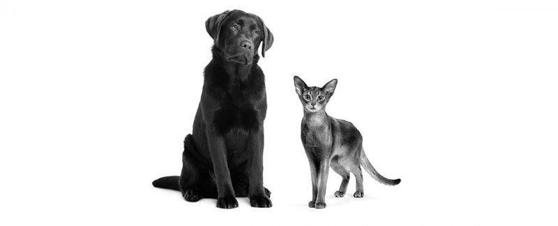 Qualidade de vida do pet idoso e o papel do médico-veterinário