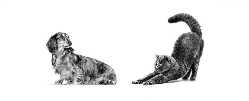 Setembro amarelo: a interação humano-animal (IHA) e seus benefícios