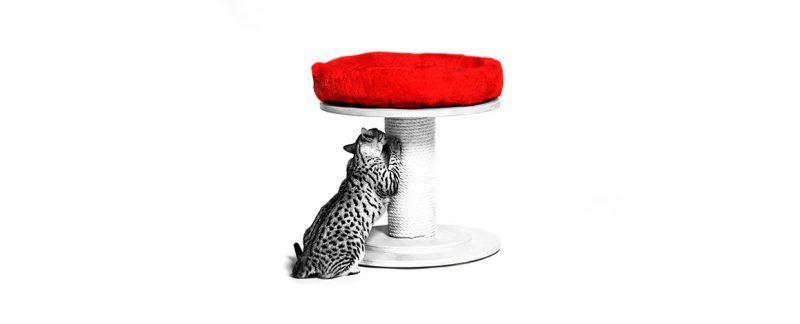 Cat Friendly Practice®: como montar uma clínica exclusiva para felinos