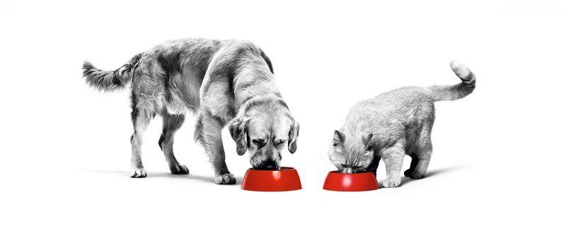 Conheça os resultados do maior estudo sobre perda de peso em cães já realizado