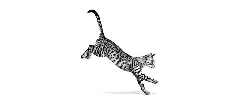 População felina cresce no brasil e mercado pet segue essa tendência