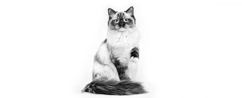 Problemas urinários são comuns em gatos: saiba mais