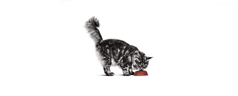 Por que gatos precisam de uma clínica com atendimento específico?