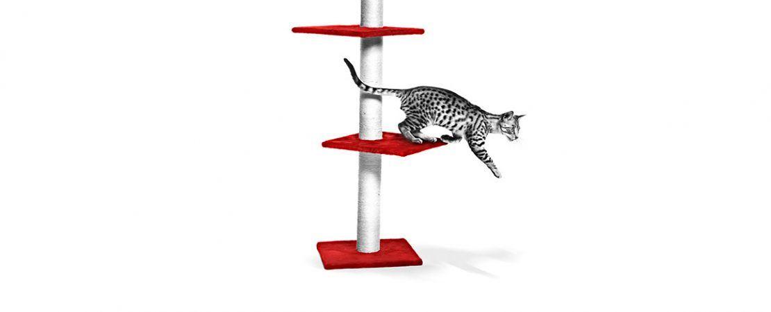 Clínicas Cat Friendly: práticas para receber pacientes felinos