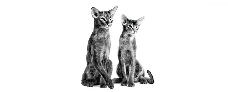 Principais distúrbios gastrointestinais em gatos: como a nutrição pode ajudar?