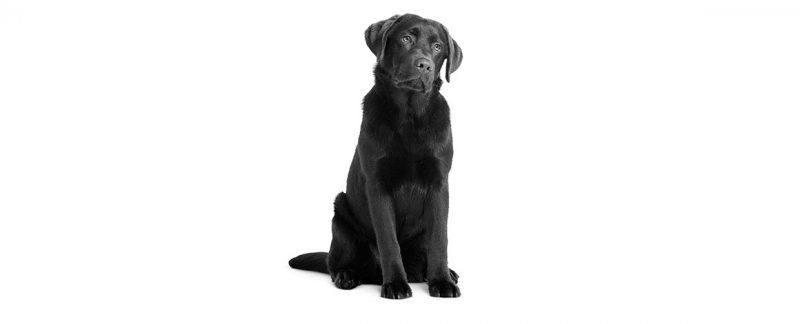 Cães com flatulência: causas e tratamentos