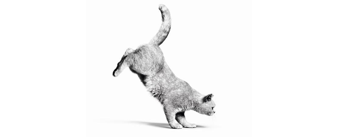 Como incluir o Escore de Condição Corporal na consulta para reconhecer a obesidade em gatos e cães