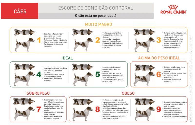 Escore de Condição Corporal - cães
