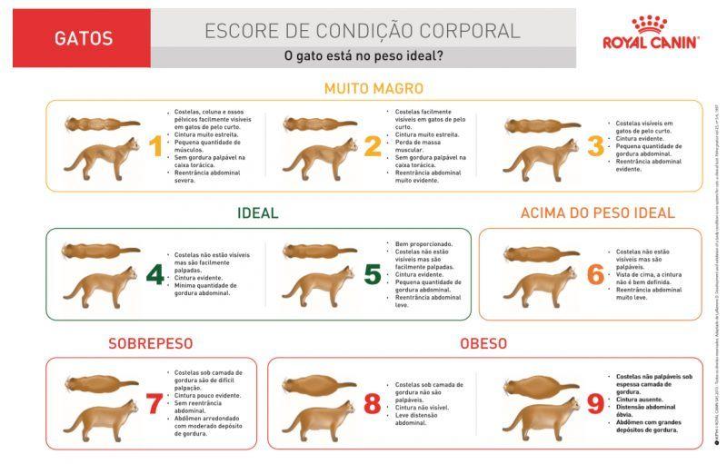 Escore de Condição Corporal - gatos