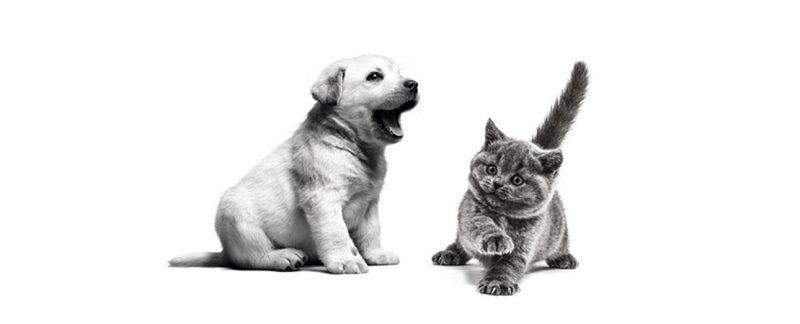 Pontos críticos na saúde de filhotes de gatos e cães