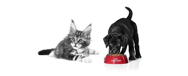 ROYAL CANIN® responde: quantidade de alimento consumida pelo animal diminui na vida adulta?