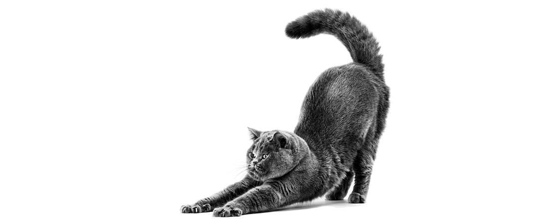 Pele sensível e pelagem opaca em gatos: como melhorar esta condição?